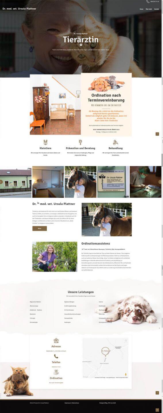 Tierarzt Website Homepage erstellen lassen Webdesign Agentur
